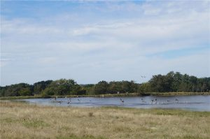 374-acres-Elmore-City-Oklahoma-30