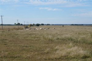 374-acres-Elmore-City-Oklahoma-11