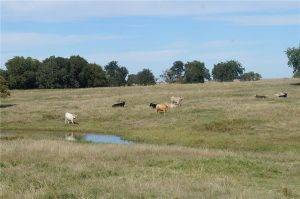 374-acres-Elmore-City-Oklahoma-9
