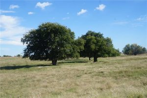 374-acres-Elmore-City-Oklahoma-7