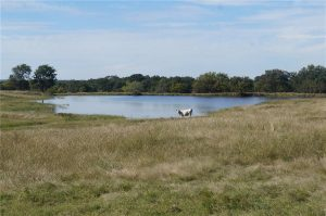 374-acres-Elmore-City-Oklahoma-5