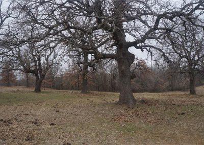 30-acres-wynnewood-oklahoma-14
